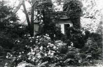 Image of Fernery Entrance with Ivy - 2004.1.162