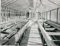 Image of Greenhouse - 2004.1.172
