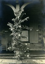 Image of Allamanda on Compton Porch  1909 - 2004.1.20