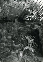 Image of Fernery Interior - 2004.1.202