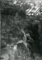 Image of Fernery Interior - 2004.1.204