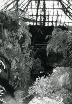 Image of Fernery Interior - 2004.1.205