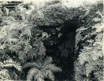 Image of Fernery's Ferns - 2004.1.206