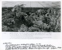 Image of Fernery Interior from Hitching & Co. Catalogue ca.1910. - 2004.1.209