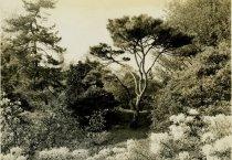 Image of Japanese Garden II  May 1937 - 2004.1.243
