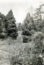 Image of Mansion and Japanese Garden 1933 - 2004.1.248