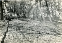 Image of Wissahickon Woods - 2004.1.298