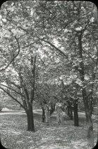 Image of Cherry Allee  1933 - 2004.1.323LS