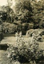 Image of Plants and Orange Balustrade  1937 - 2004.1.410