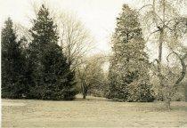 Image of Trees/Orange Balustrade  1937 - 2004.1.413