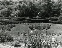 Image of Rose Garden  1977 - 2004.1.422