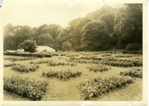 Image of Rose Garden  1937 - 2004.1.424