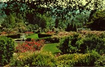 Image of Rose Garden  ~1959-1960 - 2004.1.429