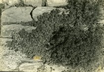 Image of Rock Wall  1933 - 2004.1.450