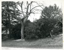Image of Rose Garden  Winter 1980 - 2004.1.460
