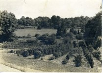 Image of Yew Nursery and English Park 1910-25 - 2004.1.485