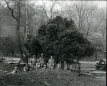 Image of Men Planting the Juniper Bush  circa 1910 - 2004.1.540