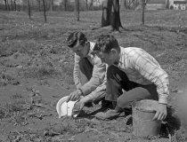 Image of People Planting  1954 - 2004.1.559N