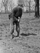 Image of Bob Pennewell Planting  1954 - 2004.1.560N