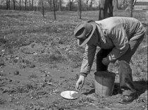 Image of John Tonkin Planting  1954 - 2004.1.562N