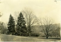 Image of Pin Oaks  in 1933 - 2004.1.566