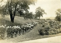Image of Flower Walk  circa 1913 - 2004.1.574