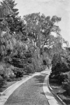 Image of Roadside in Pinetum  1933 - 2004.1.595