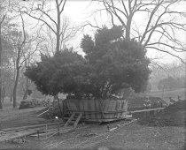 Image of Men Planting a Juniper Bush - 2004.1.603GN