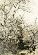 Image of Ravine Garden  circa 1918 - 2004.1.634