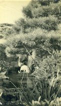 Image of Stork Statues  circa 1915 - 2004.1.735