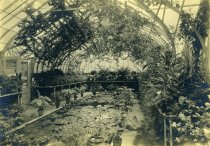 Image of Interior of Palm House in the Greenhouse Complex  ca 1902 - 2004.1.757