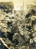Image of Interior of Fernery - 2004.1.762