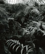 Image of Fernery - 2004.1.788