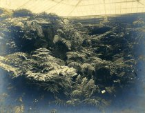Image of Interior of Fernery - 2004.1.807