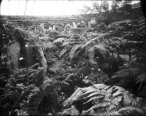 Image of Interior of Fernery  1900 - 2004.1.808