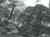 Image of Trees in Japanese Overlook Garden - 2004.1.834