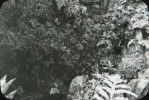 Image of Fernery Interior - 2004.1.925LS