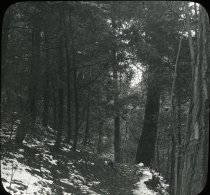 Image of Woods Near Wissahickon Creek - 2004.1.940LS
