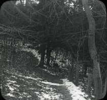 Image of Wissahickon Woods - 2004.1.941LS