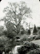 Image of Stone Bridge below the Swan Pond  Bef. 1910 - 2004.1.942LS
