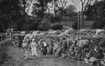 Image of Newspaper Clippings: Spring Comes to the Morris Arboretum  1933 - 2006.1.83.1