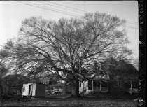 Image of Big Beech, Glenolden, PA  1923 - 2011.6.16