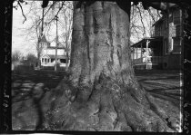 Image of Big Beech, Glenolden, PA  1923 - 2011.6.17