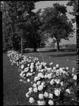 Image of Farmhouse Garden  1937 - 2011.8.119