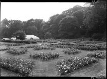 Image of Rose Garden and Conservatory  1937 - 2011.8.29
