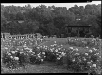 Image of Rose Garden and Summerhouse  1937 - 2011.8.36