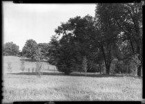 Image of New Poplars  1937 - 2011.8.56