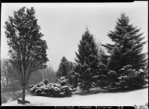 Image of Winter Among the Conifers  1937 - 2011.8.95