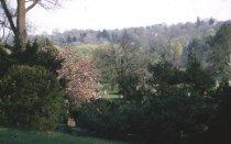 Image of Magnolia soulangeana 'Lennei'  1965 - 2012.1.1