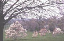 Image of Magnolia Slope  1966 - 2012.1.10